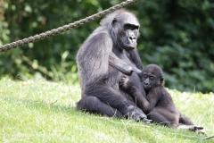 Zoo_Hannover_010917_IMG_8745