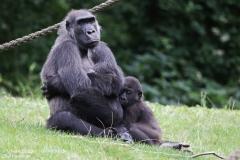 Zoo_Hannover_010917_IMG_8751