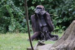 Zoo_Hannover_010917_IMG_8753