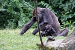 Zoo_Hannover_010917_IMG_8771