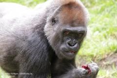Zoo_Hannover_010917_IMG_8773