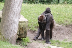 Zoo_Hannover_010917_IMG_8783