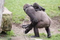 Zoo_Hannover_010917_IMG_8787