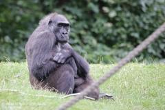 Zoo_Hannover_010917_IMG_8789