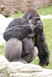 Zoo_Hannover_010917_IMG_8794