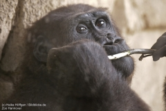 Zoo_Hannover_010917_IMG_8812