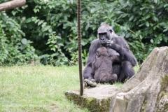 Zoo_Hannover_010917_IMG_8817