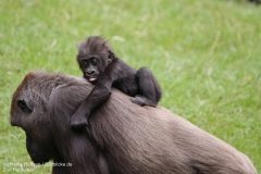 Zoo_Hannover_010917_IMG_8831