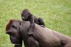 Zoo_Hannover_010917_IMG_8832