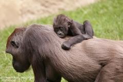 Zoo_Hannover_010917_IMG_8858