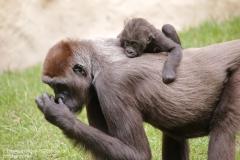 Zoo_Hannover_010917_IMG_8875