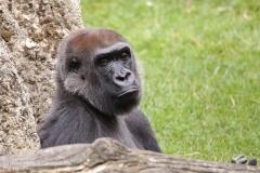 Zoo_Hannover_010917_IMG_8925