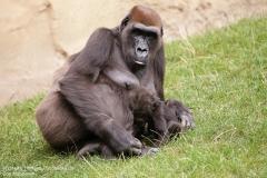 Zoo_Hannover_010917_IMG_8950