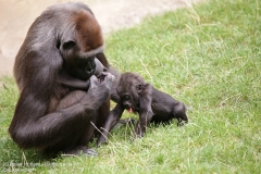 Zoo_Hannover_010917_IMG_8958