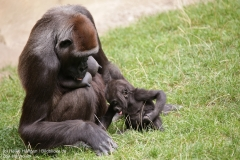 Zoo_Hannover_010917_IMG_8960