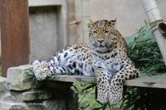 Zoo_Hannover_010917_IMG_9438