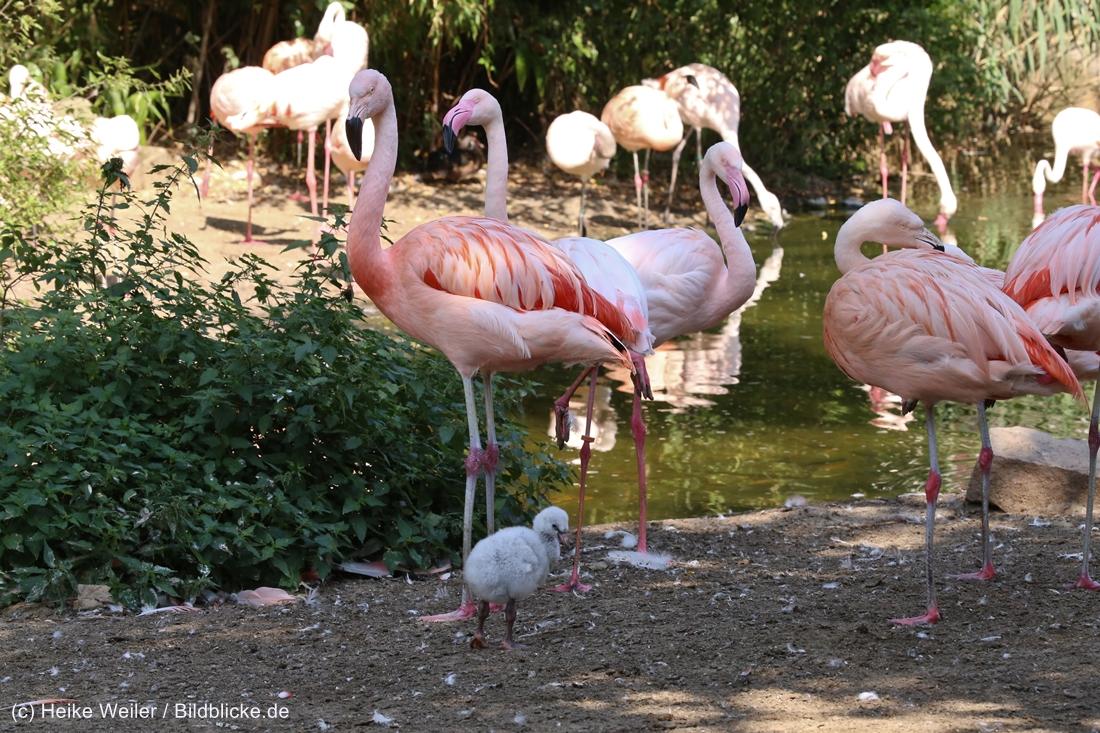 Zoo_Hannover_020916_IMG_7030