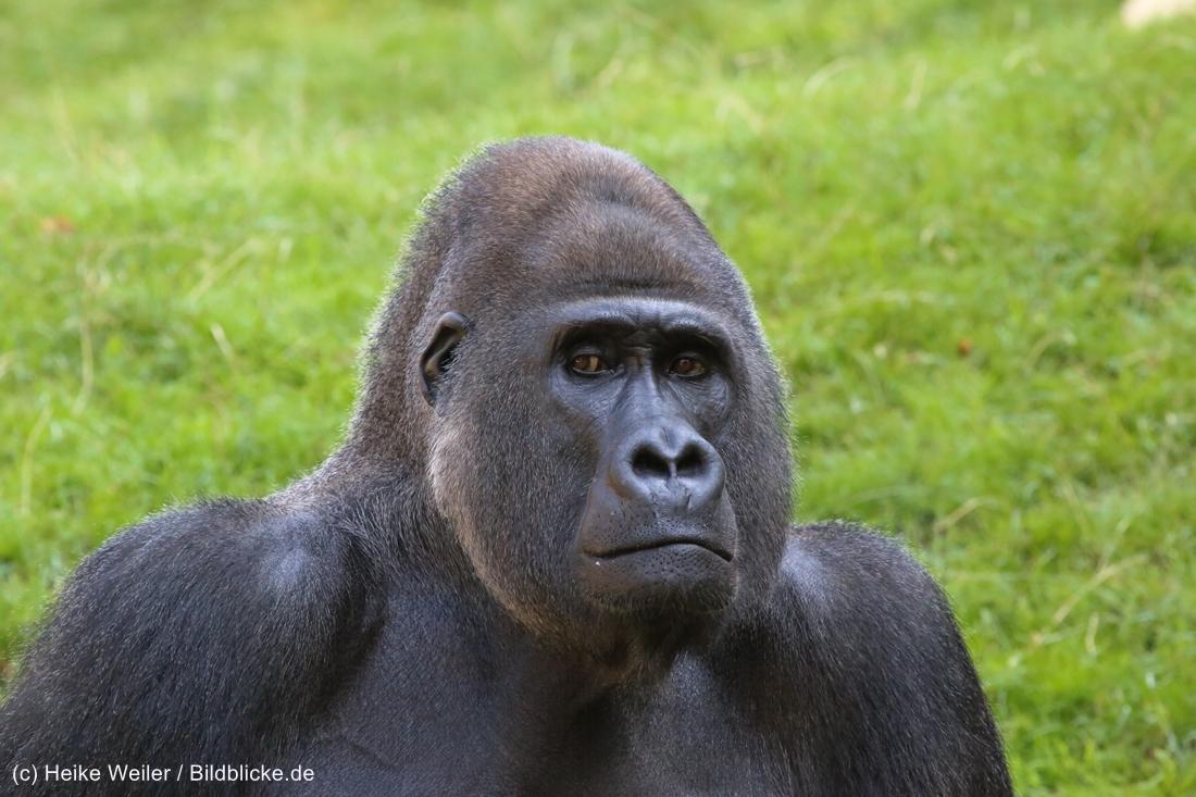 Zoo_Hannover_020916_IMG_7114