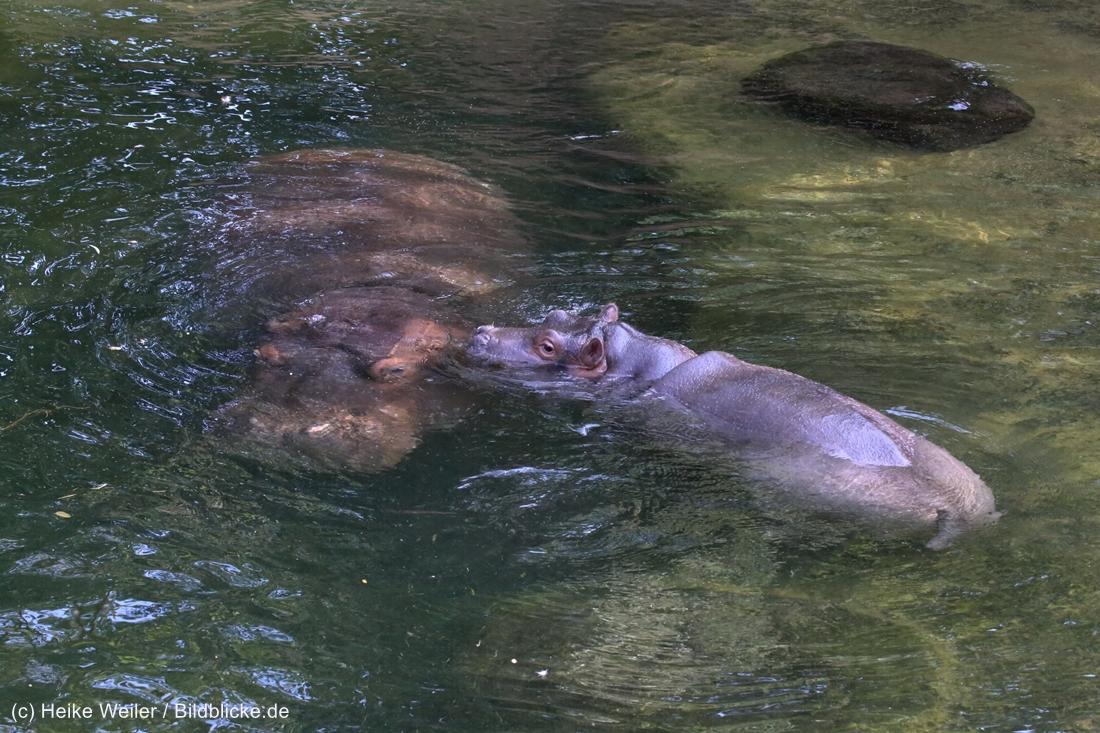 Zoo_Hannover_020916_IMG_7223