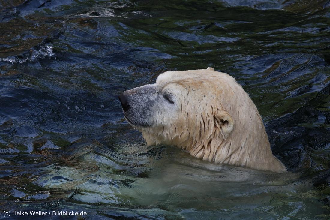 Zoo_Hannover_020916_IMG_7485