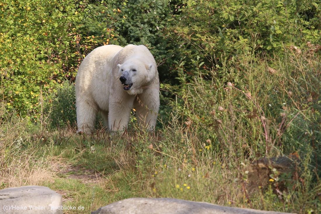 Zoo_Hannover_020916_IMG_7517