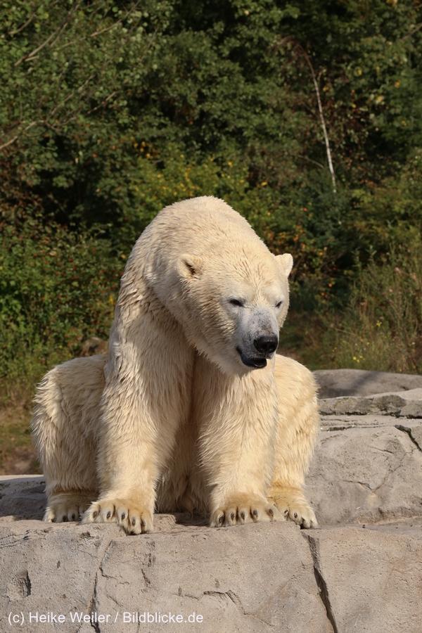 Zoo_Hannover_020916_IMG_7545