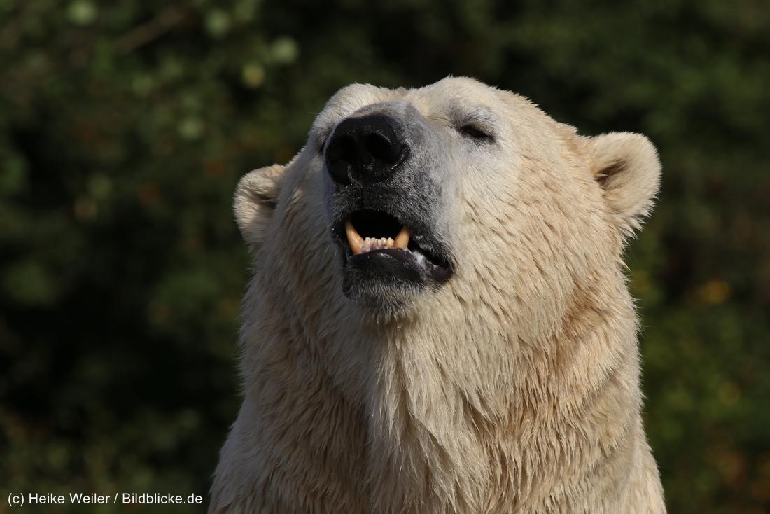 Zoo_Hannover_020916_IMG_7558