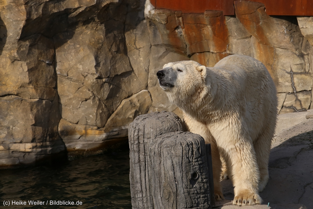 Zoo_Hannover_020916_IMG_7560