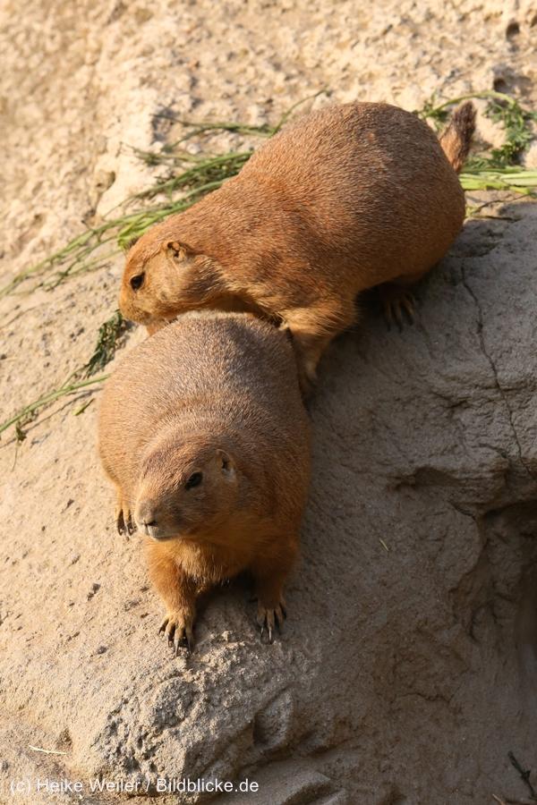 Zoo_Hannover_020916_IMG_7650