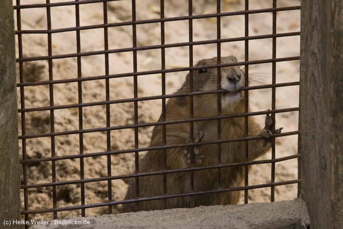 Zoo_Hannover_020916_IMG_7652