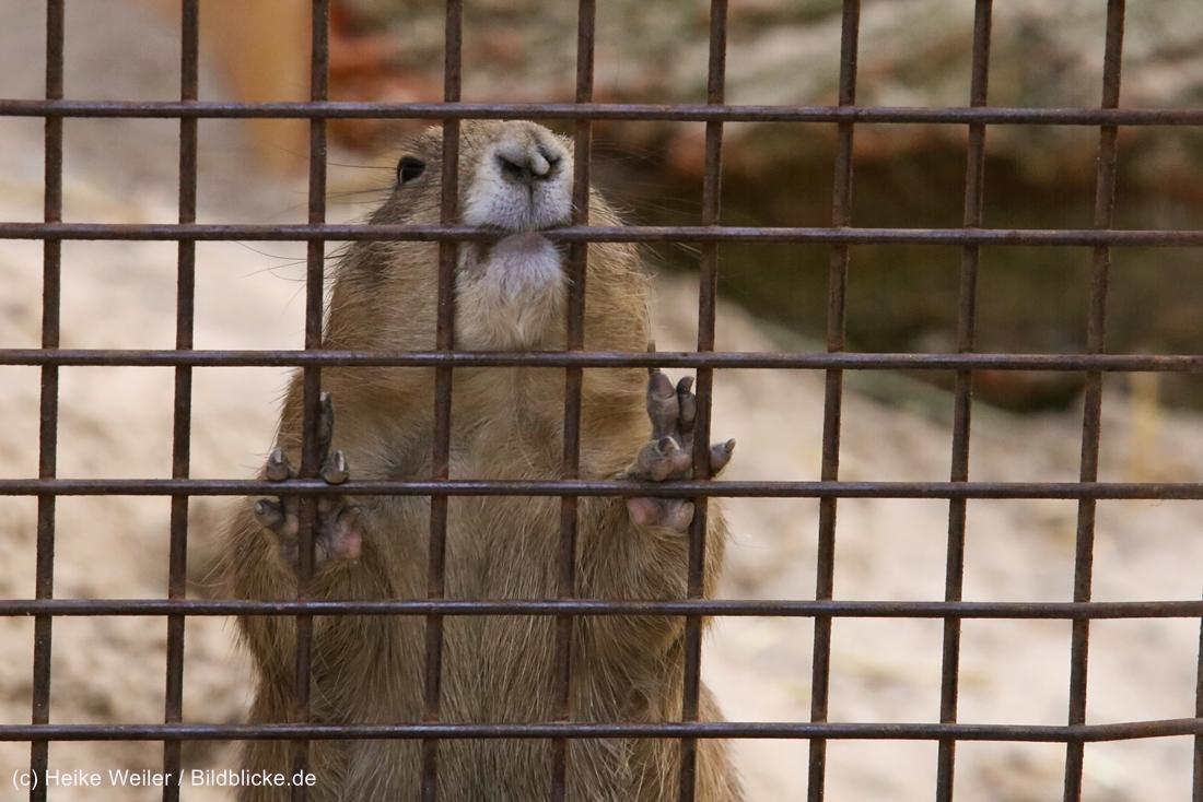 Zoo_Hannover_020916_IMG_7664
