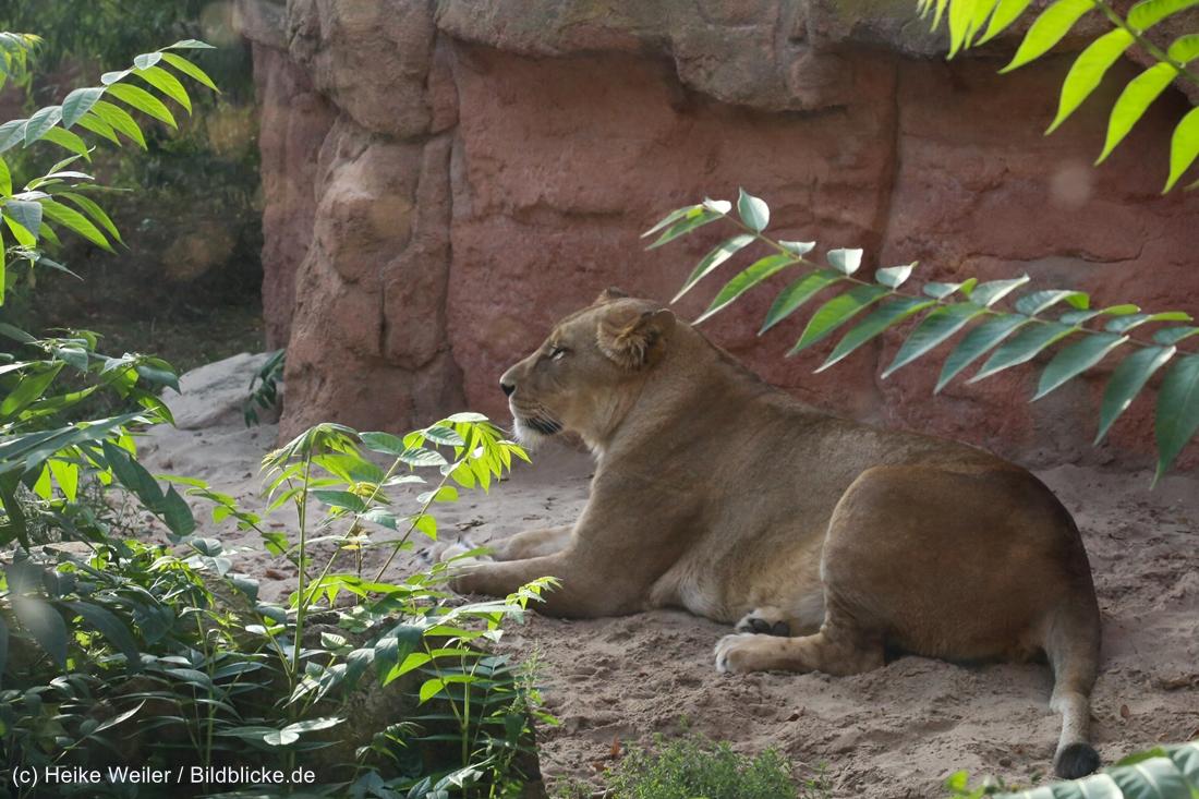 Zoo_Hannover_020916_IMG_7683
