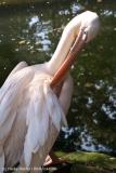 Zoo_Hannover_020916_IMG_6995
