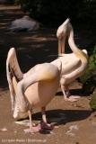 Zoo_Hannover_020916_IMG_7011