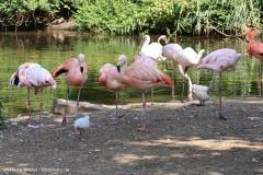 Zoo_Hannover_020916_IMG_7032