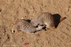 Zoo_Hannover_020916_IMG_7037