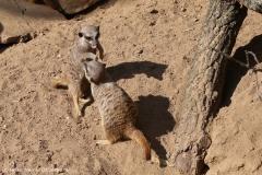 Zoo_Hannover_020916_IMG_7048