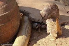 Zoo_Hannover_020916_IMG_7059