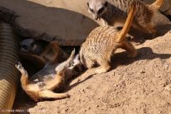 Zoo_Hannover_020916_IMG_7071