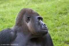 Zoo_Hannover_020916_IMG_7113