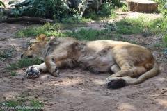 Zoo_Hannover_020916_IMG_7123