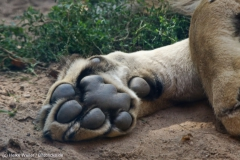 Zoo_Hannover_020916_IMG_7127