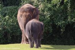 Zoo_Hannover_020916_IMG_7136