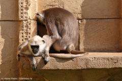 Zoo_Hannover_020916_IMG_7147