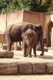 Zoo_Hannover_020916_IMG_7174