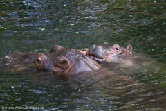 Zoo_Hannover_020916_IMG_7231