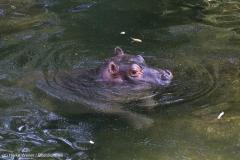 Zoo_Hannover_020916_IMG_7252