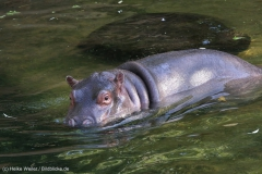 Zoo_Hannover_020916_IMG_7333