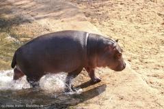 Zoo_Hannover_020916_IMG_7362