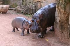 Zoo_Hannover_020916_IMG_7394